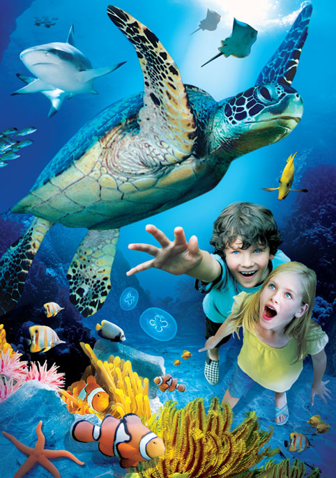 The London Aquarium - London Aquarium tickets - turtles