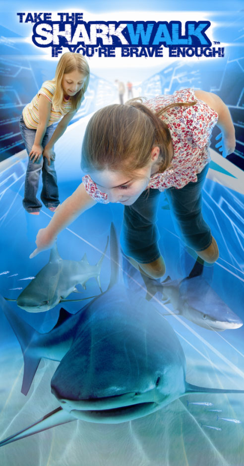 The London Aquarium - London Aquarium tickets - The Shark Walk
